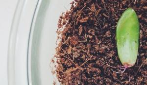 Sukkulente selber vermehren