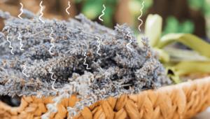 aromatherapie lavendel