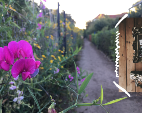 kleingarten berlin